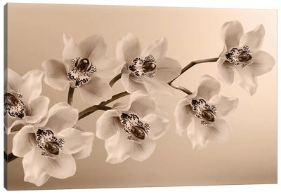 Branch Of Sepia Orchids Canvas Art Print