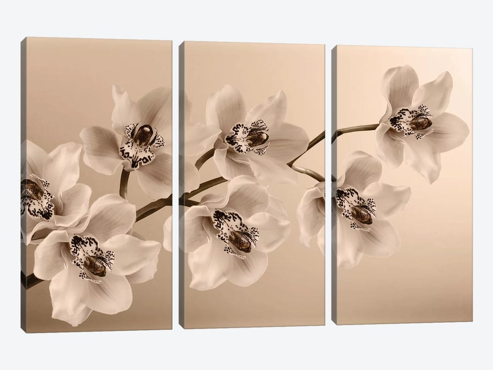Branch Of Sepia Orchids by Tom Quartermaine 3-piece Canvas Art