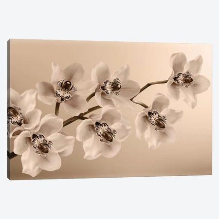 Branch Of Sepia Orchids Canvas Print #TQU67} by Tom Quartermaine Art Print