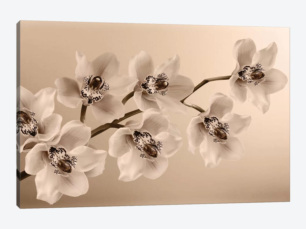 Branch Of Sepia Orchids by Tom Quartermaine 1-piece Canvas Art