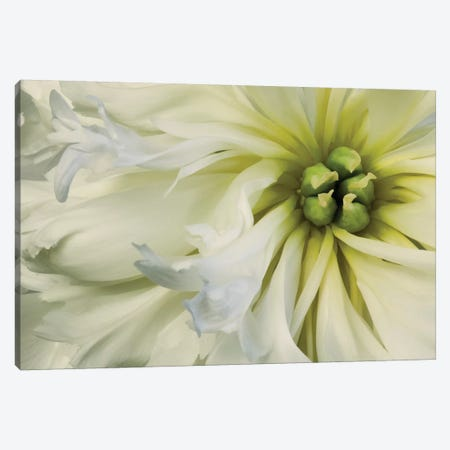 Close-Up Of A Dahlia Canvas Print #TQU74} by Tom Quartermaine Canvas Artwork