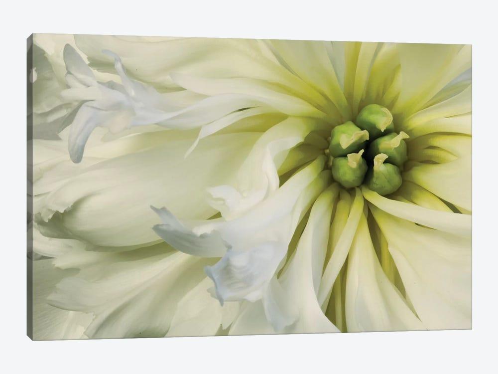 Close-Up Of A Dahlia by Tom Quartermaine 1-piece Canvas Art