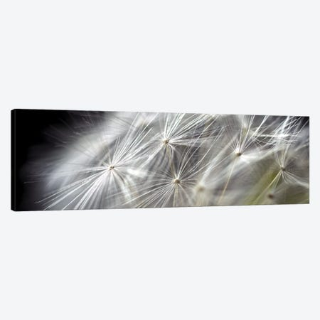 Close-Up Of Dandelion On Black 3-Piece Canvas #TQU75} by Tom Quartermaine Canvas Wall Art