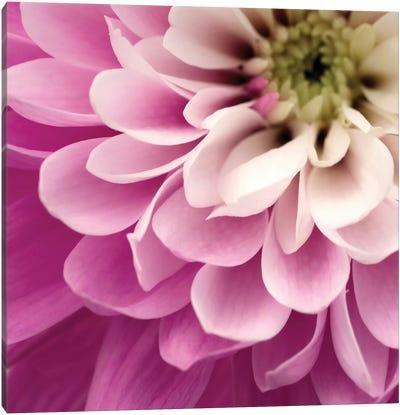 Close-Up Of Pink Flower Canvas Art Print