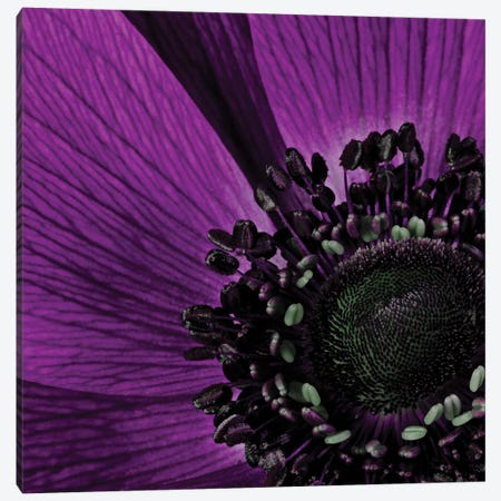 Close-Up Of Purple Flower 3-Piece Canvas #TQU78} by Tom Quartermaine Canvas Print