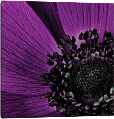 Close-Up Of Purple Flower Canvas Art Print