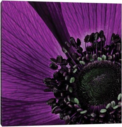 Close-Up Of Purple Flower Canvas Art Print