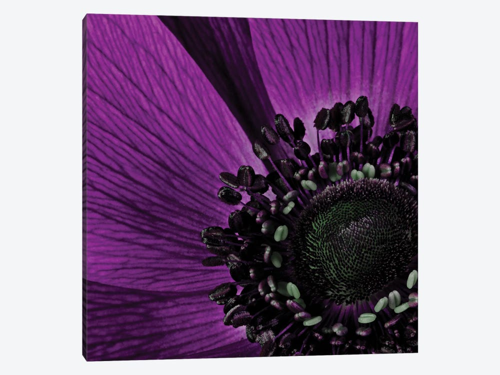Close-Up Of Purple Flower by Tom Quartermaine 1-piece Canvas Wall Art