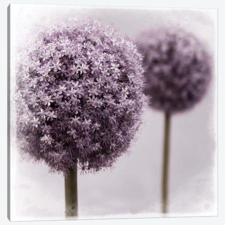 2 Purple Alliums 3-Piece Canvas #TQU7} by Tom Quartermaine Canvas Print