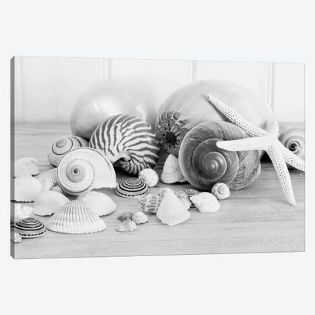 Collection Of Shells B&W Canvas Print #TQU81} by Tom Quartermaine Canvas Artwork