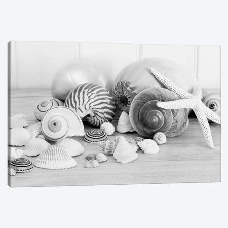 Collection Of Shells B&W 3-Piece Canvas #TQU81} by Tom Quartermaine Canvas Artwork