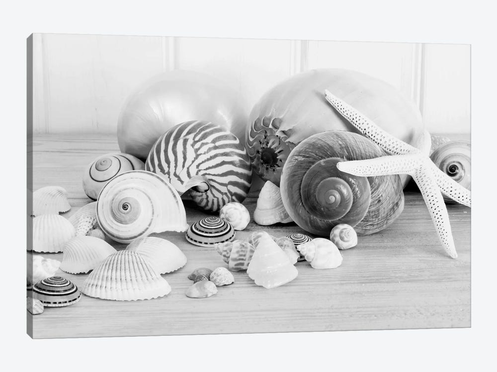 Collection Of Shells B&W by Tom Quartermaine 1-piece Canvas Wall Art