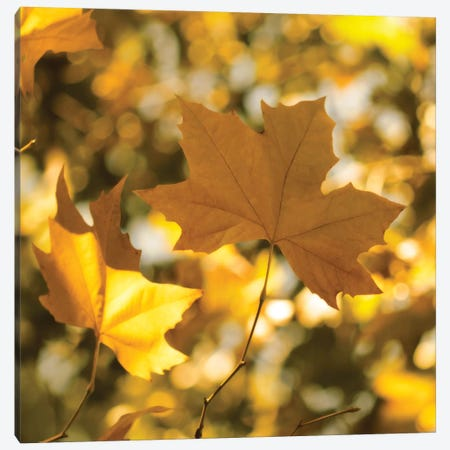 Fall Leaves I Canvas Print #TQU94} by Tom Quartermaine Canvas Artwork