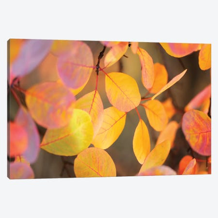 Fall Leaves II Canvas Print #TQU95} by Tom Quartermaine Canvas Wall Art