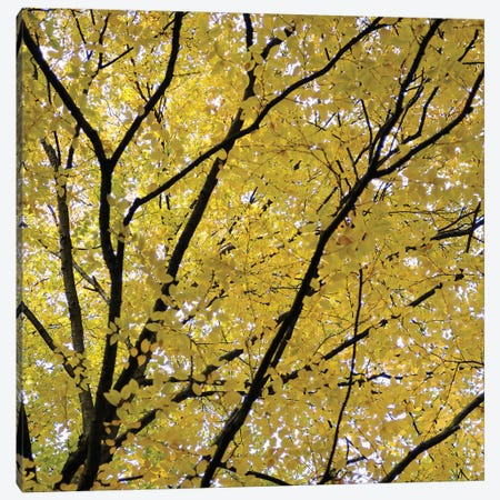 Fall Leaves III Canvas Print #TQU96} by Tom Quartermaine Canvas Art