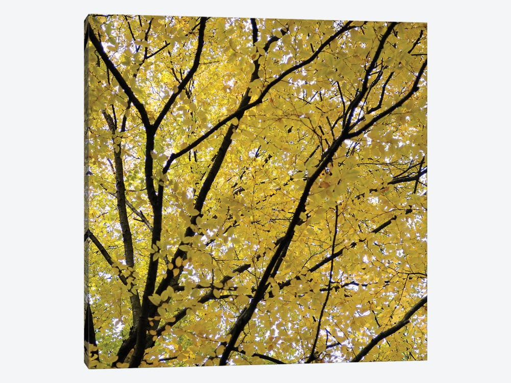 Fall Leaves III by Tom Quartermaine 1-piece Canvas Artwork