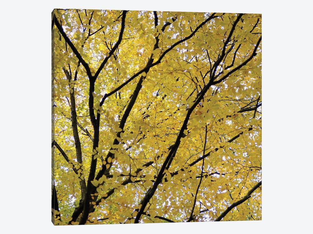 Fall Leaves III by Tom Quartermaine 1-piece Canvas Artwork