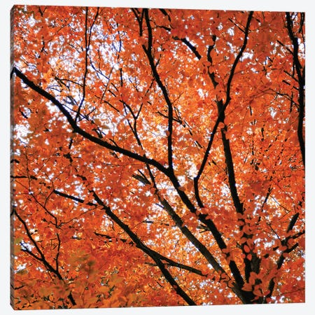 Fall Leaves IV Canvas Print #TQU97} by Tom Quartermaine Canvas Artwork