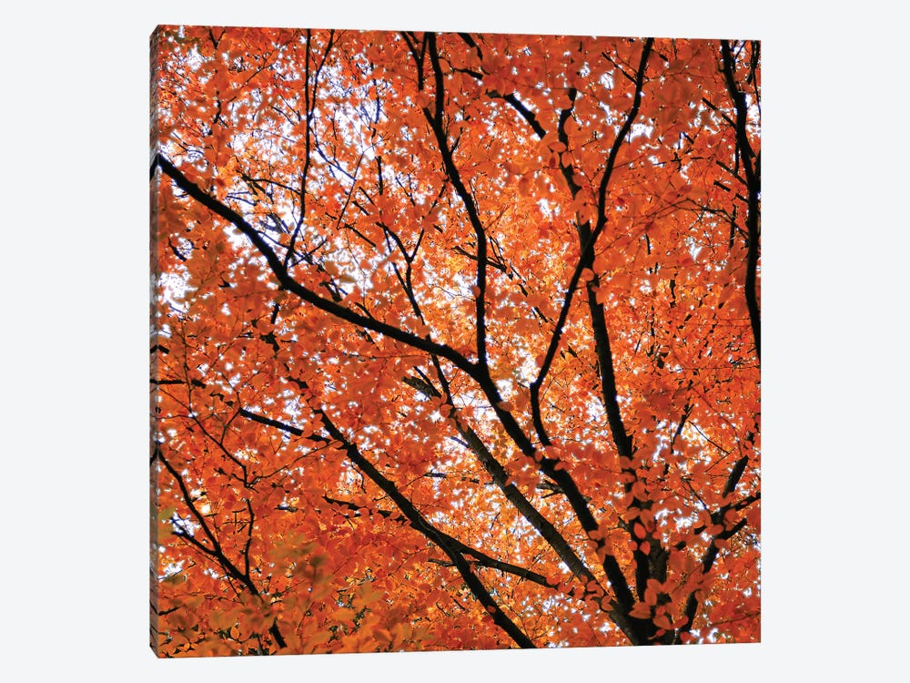 Fall Leaves IV by Tom Quartermaine 1-piece Canvas Art Print