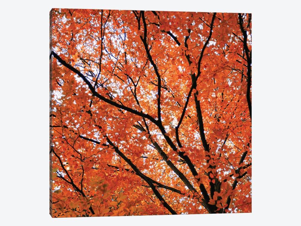 Fall Leaves IV by Tom Quartermaine 1-piece Canvas Art Print
