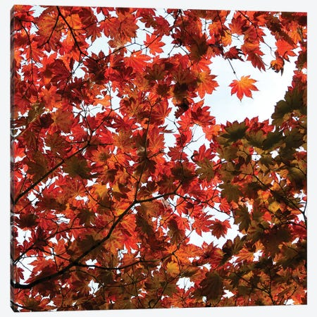 Fall Leaves V Canvas Print #TQU98} by Tom Quartermaine Art Print