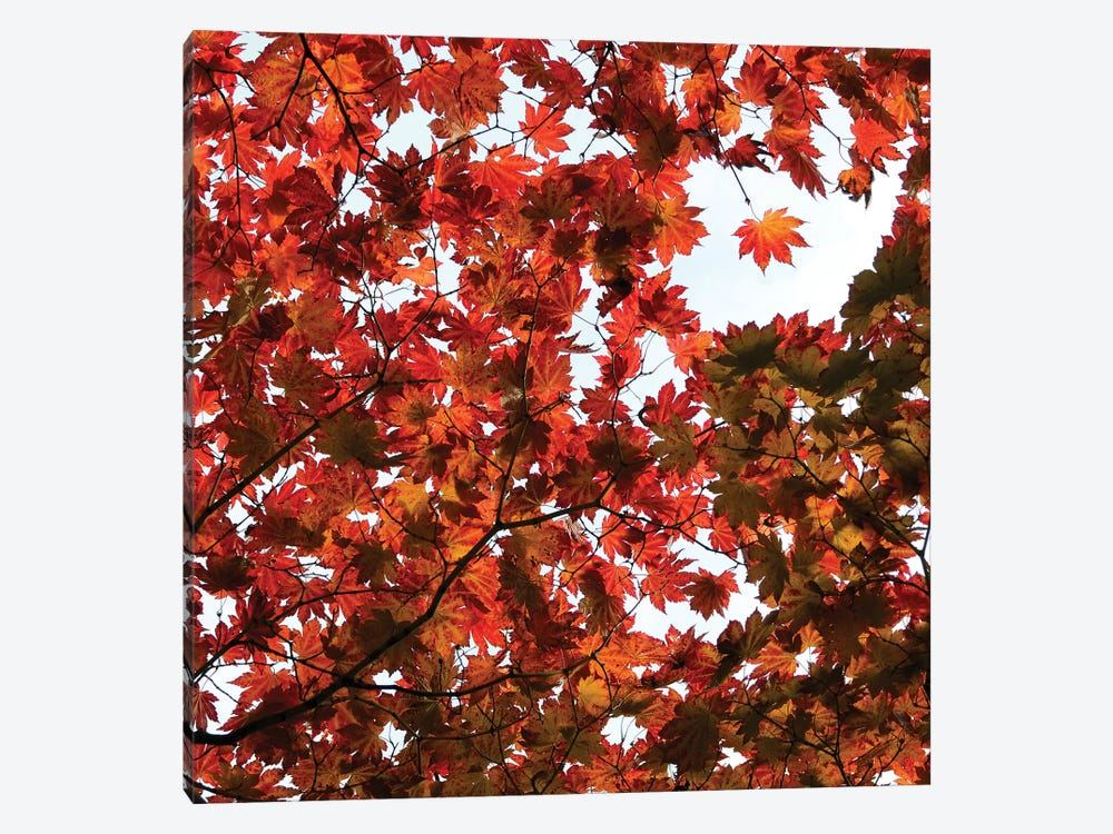 Fall Leaves V by Tom Quartermaine 1-piece Canvas Art