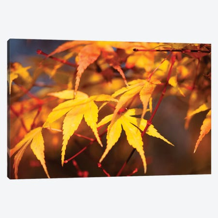 Fall Leaves VII Canvas Print #TQU99} by Tom Quartermaine Art Print