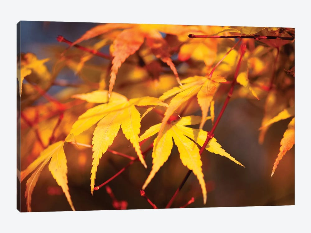 Fall Leaves VII by Tom Quartermaine 1-piece Canvas Print