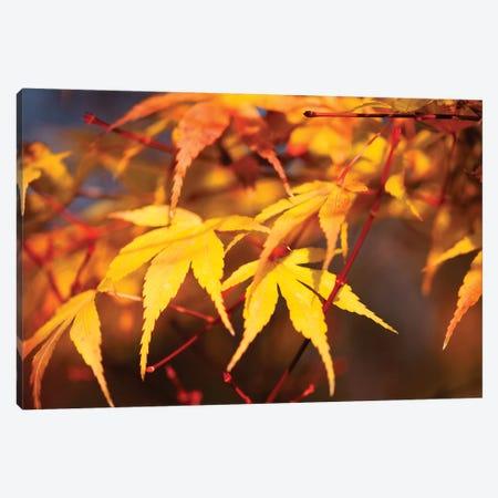Fall Leaves VII Canvas Print #TQU99} by Tom Quartermaine Art Print