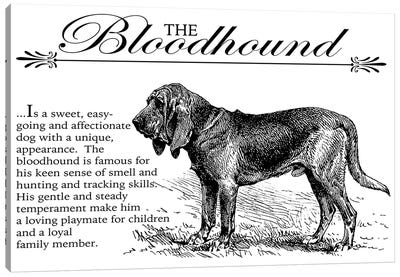 Vintage Bloodhound Storybook Style Canvas Art Print