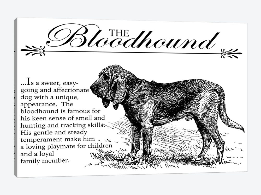 Vintage Bloodhound Storybook Style by Traci Anderson 1-piece Canvas Art Print