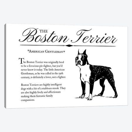 Vintage Boston Terrier Canvas Print #TRA121} by Traci Anderson Canvas Art