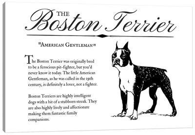 Vintage Boston Terrier Canvas Art Print