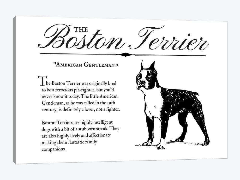 Vintage Boston Terrier by Traci Anderson 1-piece Canvas Artwork