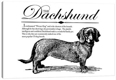 Vintage Dachshund Storybook Style Canvas Art Print