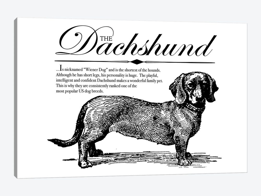 Vintage Dachshund Storybook Style by Traci Anderson 1-piece Canvas Wall Art