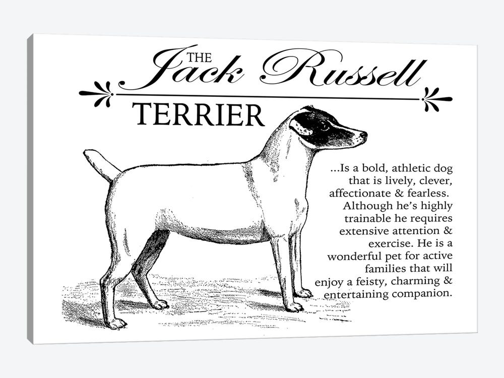 Vintage Jack Russell Storybook Style by Traci Anderson 1-piece Canvas Wall Art