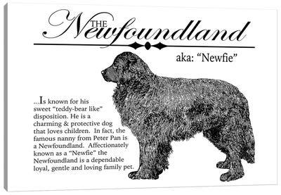 Vintage Newfoundland Storybook Style Canvas Art Print