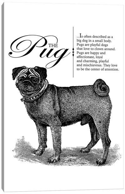 Vintage Pug Storybook Style Canvas Art Print