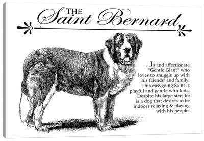 Vintage Saint Bernard Storybook Style Canvas Art Print