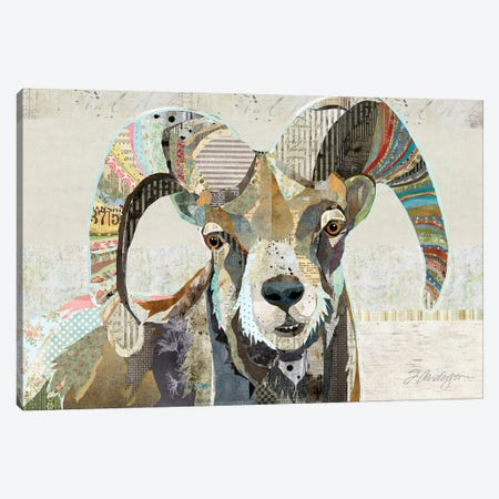 Wild Bighorn Sheep Canvas Print #TRA148} by Traci Anderson Canvas Artwork