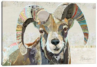 Wild Bighorn Sheep Canvas Art Print