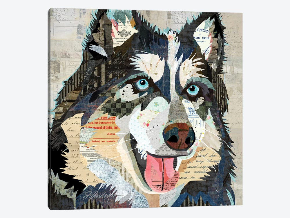 Steely Eyed Siberian Husky by Traci Anderson 1-piece Canvas Art Print