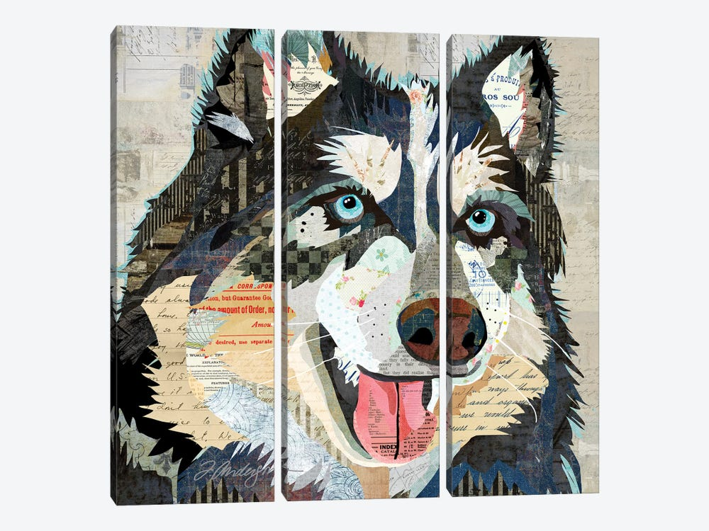 Steely Eyed Siberian Husky by Traci Anderson 3-piece Canvas Print