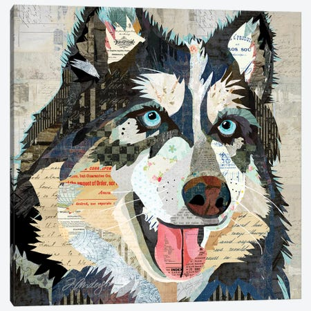 Steely Eyed Siberian Husky Canvas Print #TRA173} by Traci Anderson Canvas Print