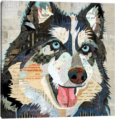 Steely Eyed Siberian Husky Canvas Art Print