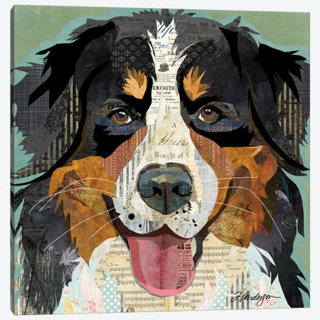 Bernese Mountain Dog Collage Canvas Print #TRA181} by Traci Anderson Canvas Art