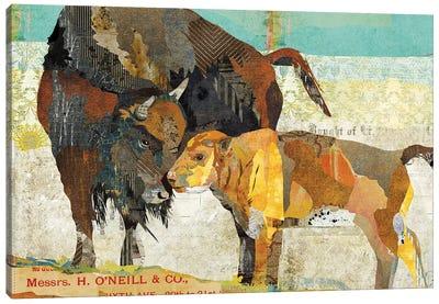 Bison Son Canvas Art Print