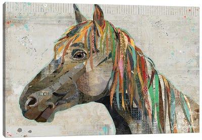 Pryor Mountain Wild Stallion Canvas Art Print