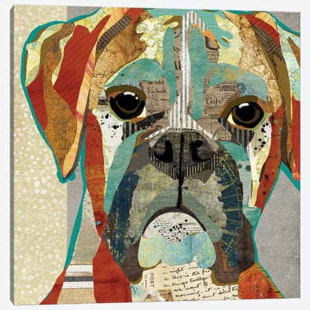 Boxer Canvas Print #TRA21} by Traci Anderson Canvas Art